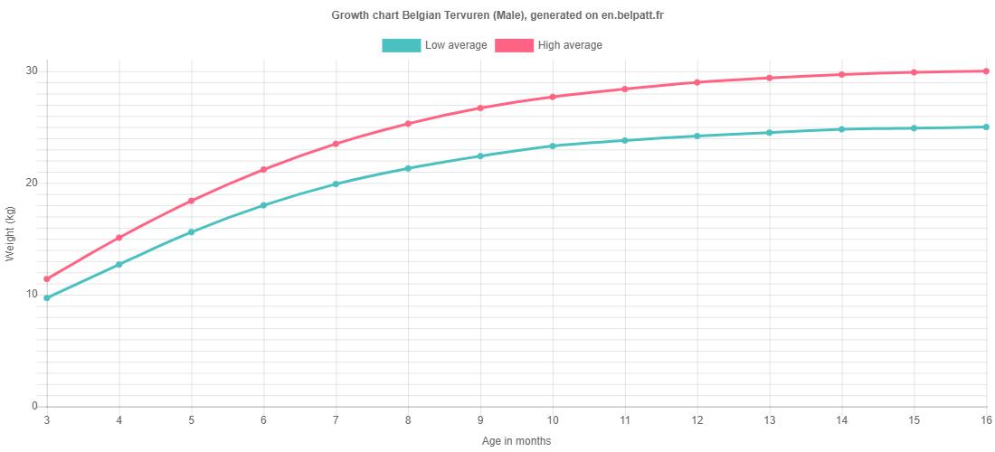 Growth chart Belgian Tervuren male