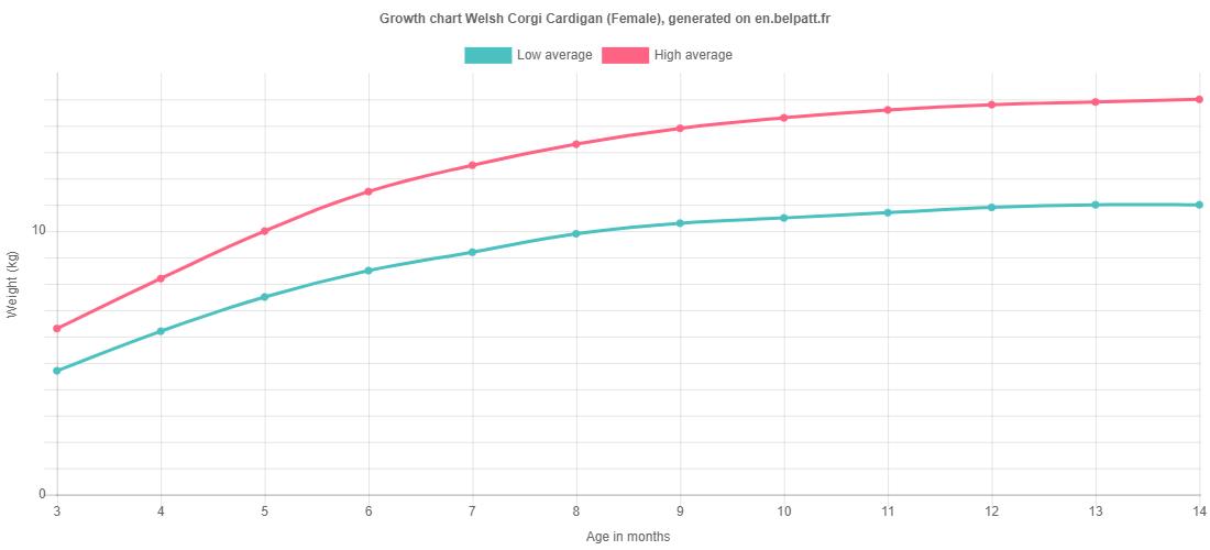 Growth chart Welsh Corgi Cardigan female