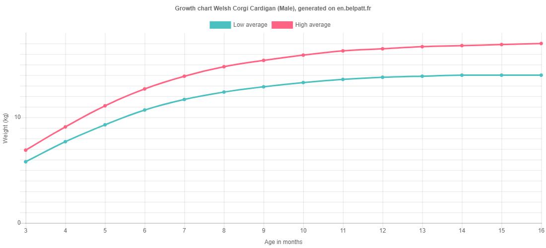 Growth chart Welsh Corgi Cardigan male