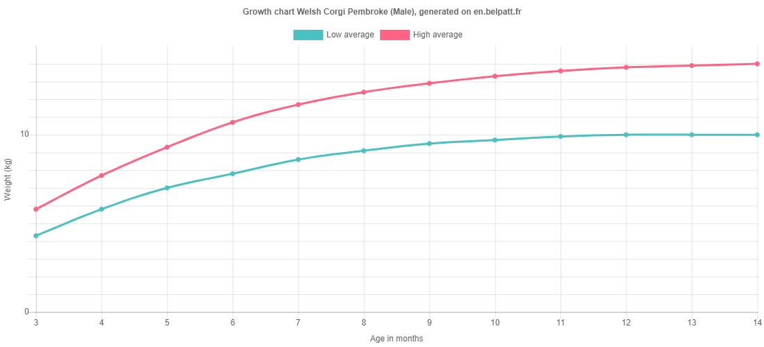 Growth chart Welsh Corgi Pembroke male