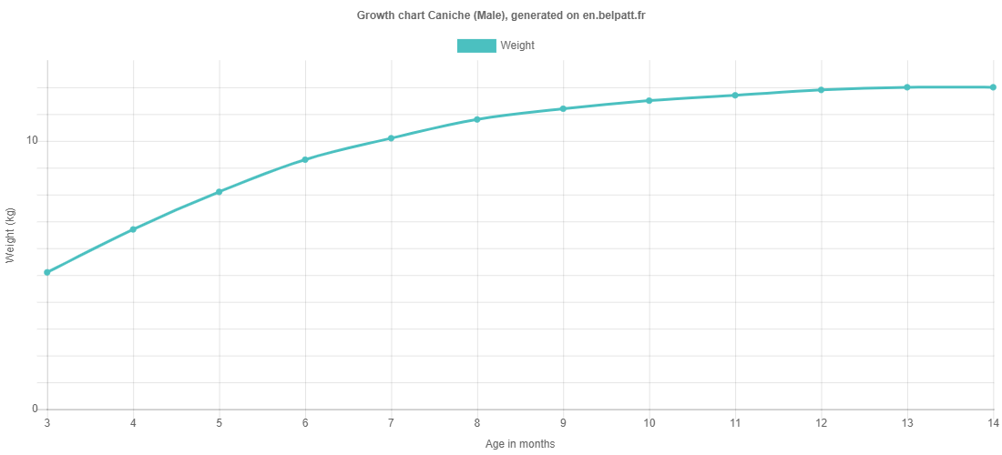 Growth chart Caniche male