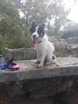 Elsie, Border Collie