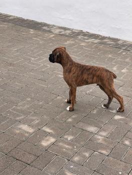 Axel, Boxer