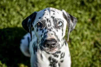 Nash, Dalmatien