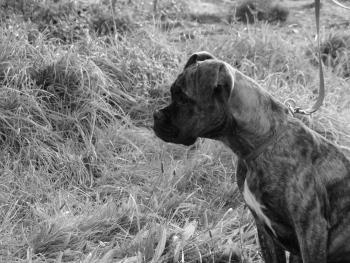 Thalia, Boxer