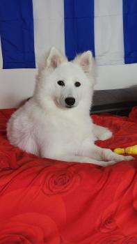 Luna, Samoyede