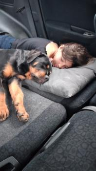 Argo, Rottweiler
