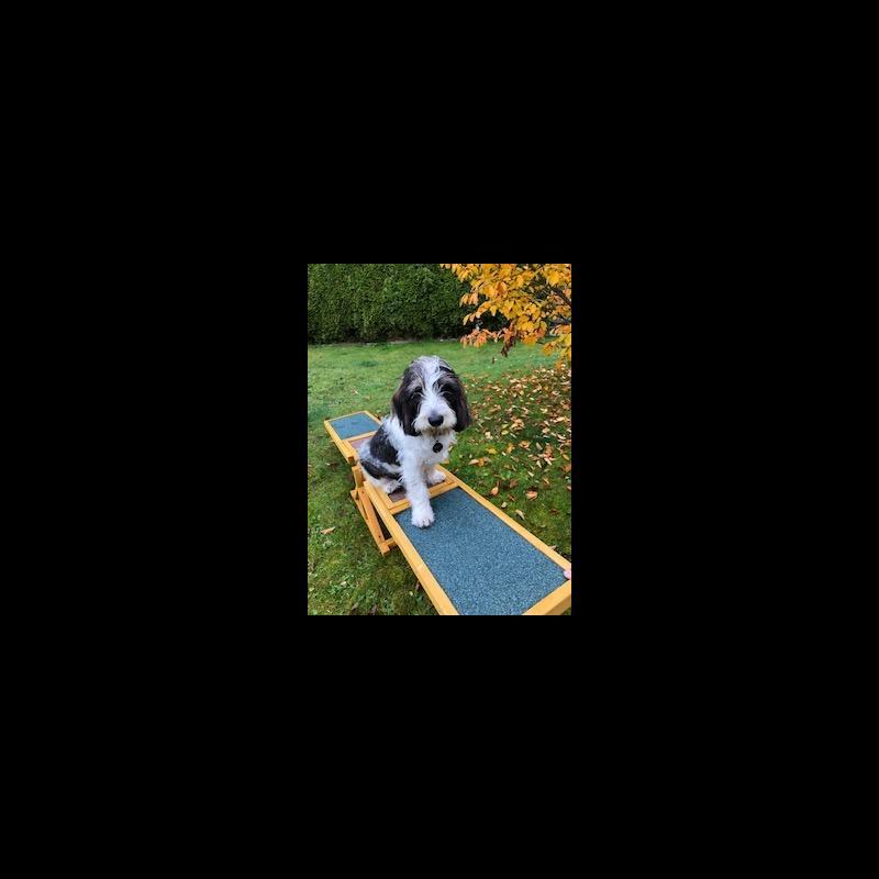 Growth Basset Griffon Vendeen - Puppy weight chart Basset ...